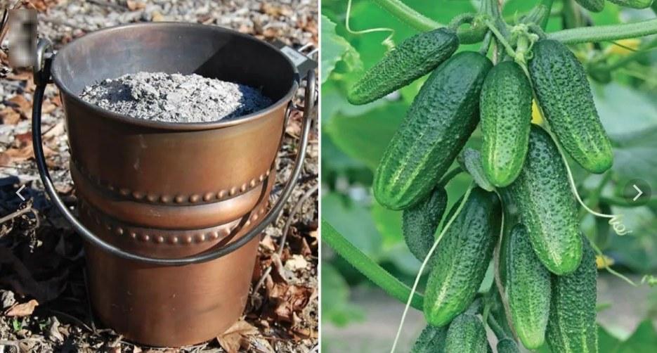 Чем подкормить огурцы — простые и эффективные схемы подкормок огурцов для хорошего роста (115 фото)