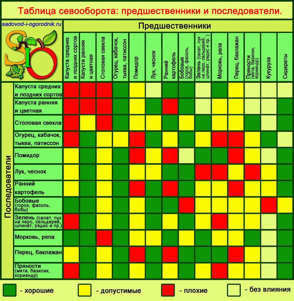 Фасоль: посадка и уход в открытом грунте, выращивание из семян, как хранить