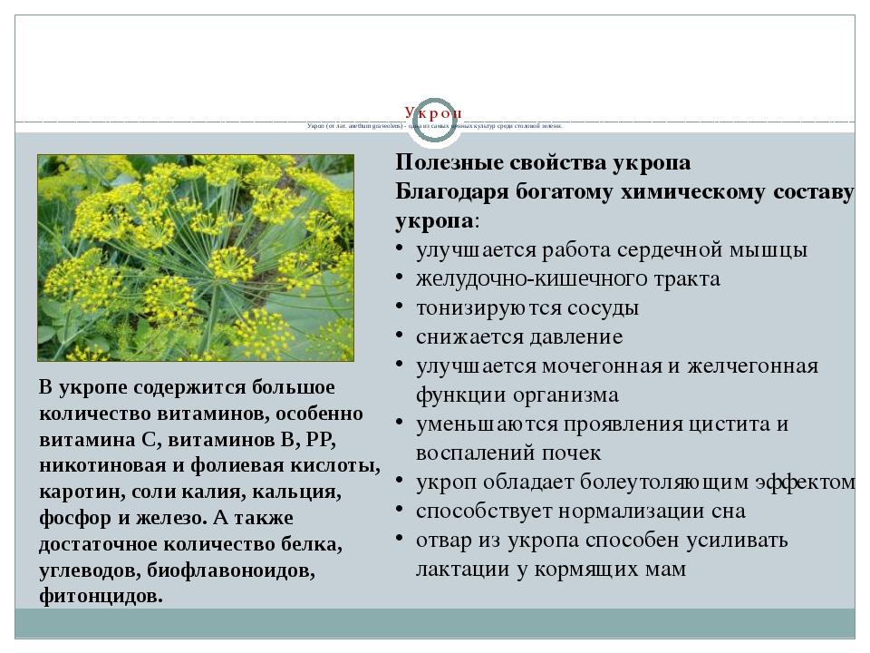 Семена укропа полезные свойства. противопоказания. применение.