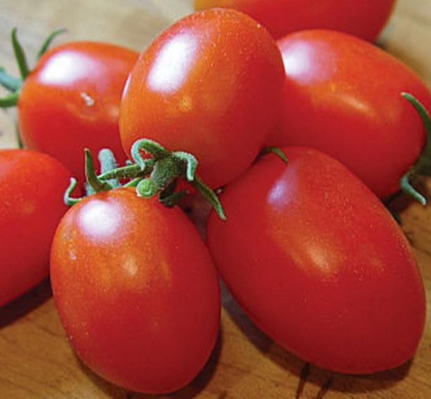 Лучшие сорта томатов для маринования, засолки и консервирования, фото отзывы