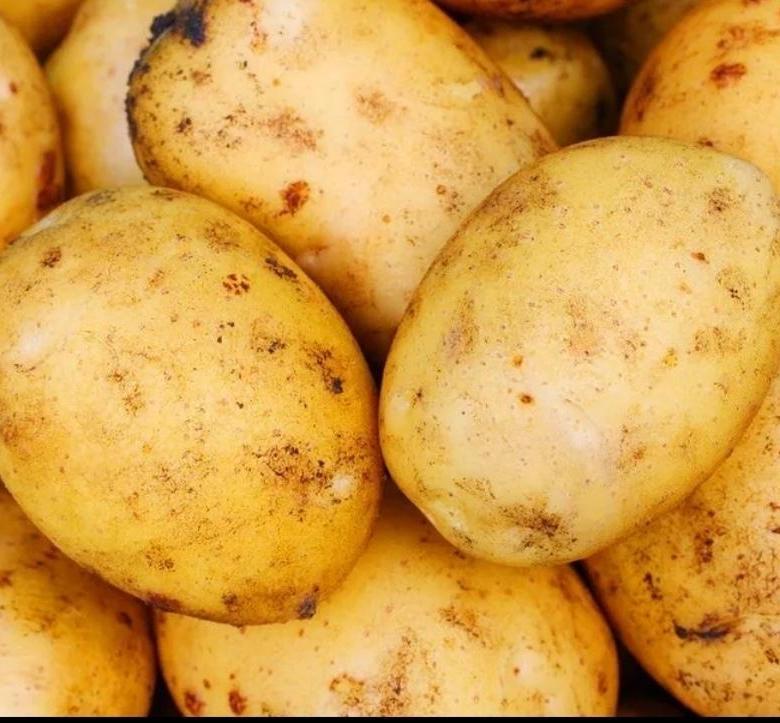 Картофель уладар: описание и характеристика сорта, фото, отзывы