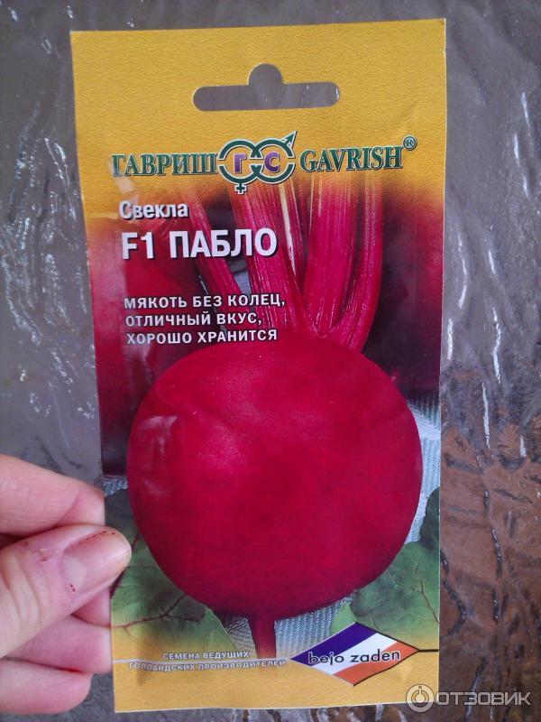 Что это за свекла с названием пабло f1? описание сорта, достоинства и недостатки, особенности выращивания