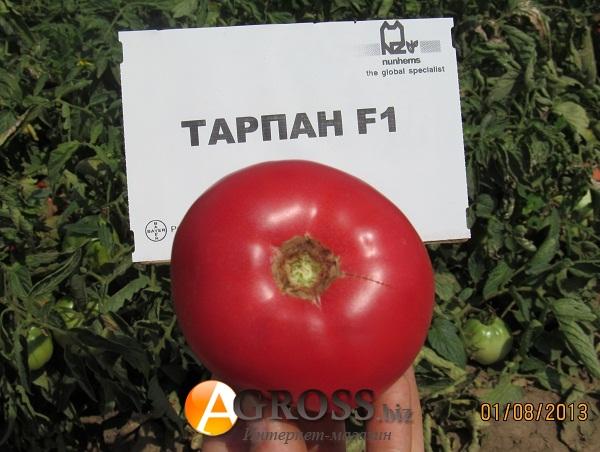 Томат пандароза f1: отзывы дачников и инструкция по выращиванию этого сорта, его описание и характеристика