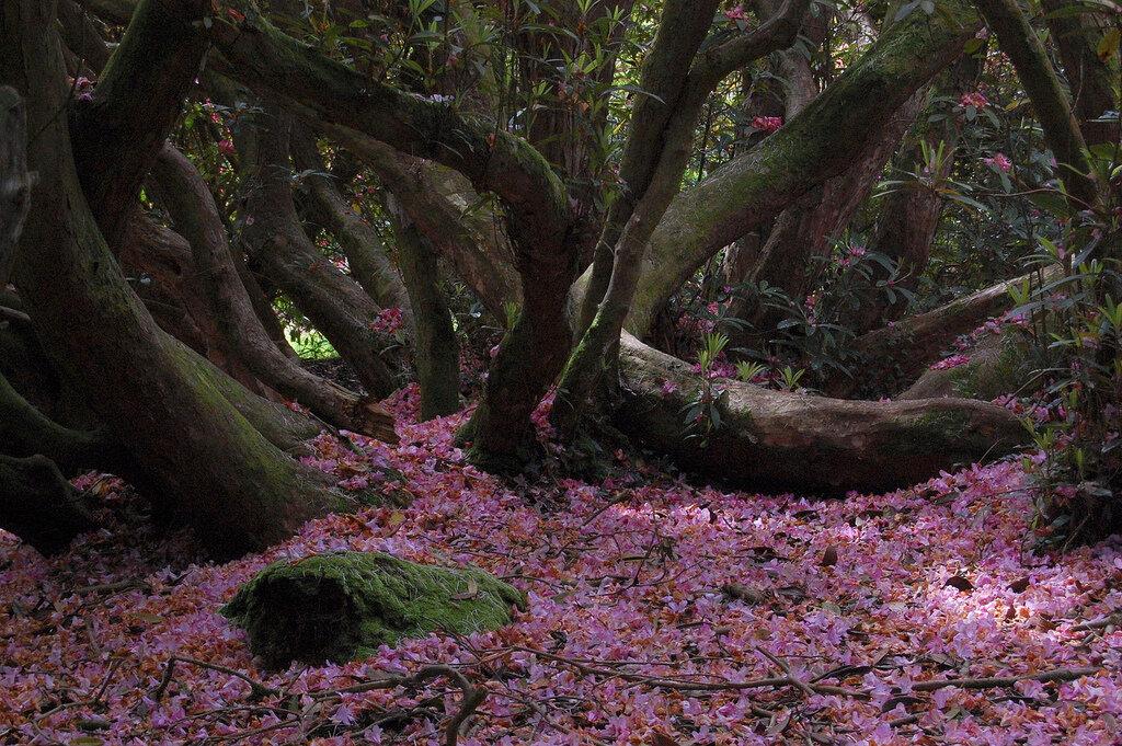 Парк «затерянные сады хелигана» — зеленая сказка старой англии