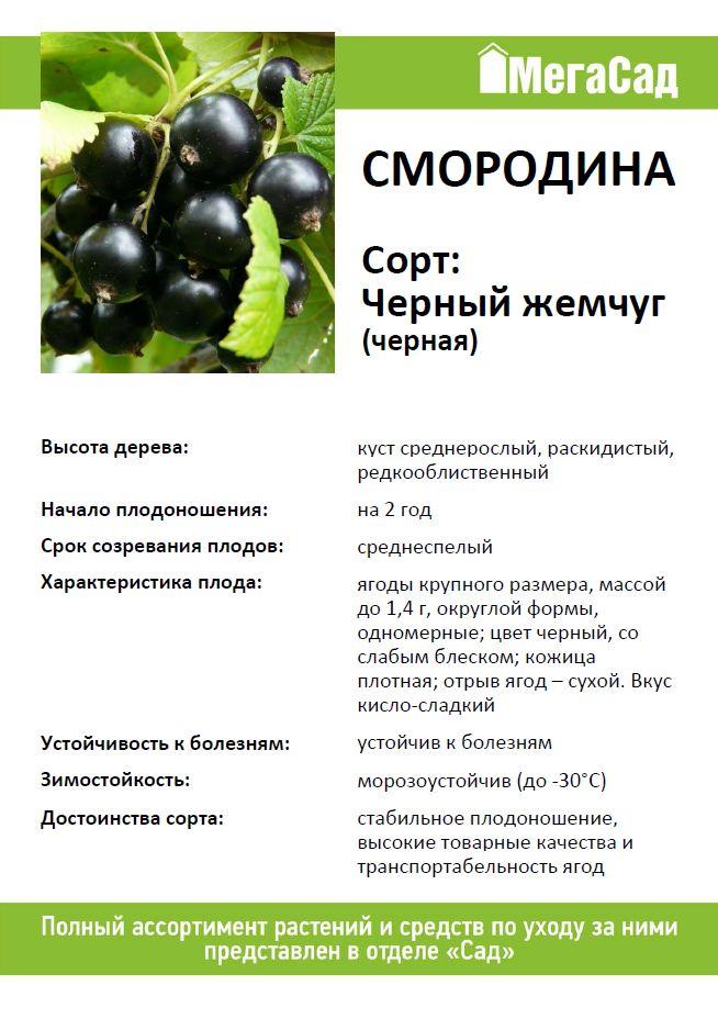 Смородина черный жемчуг - описание сорта фото отзывы