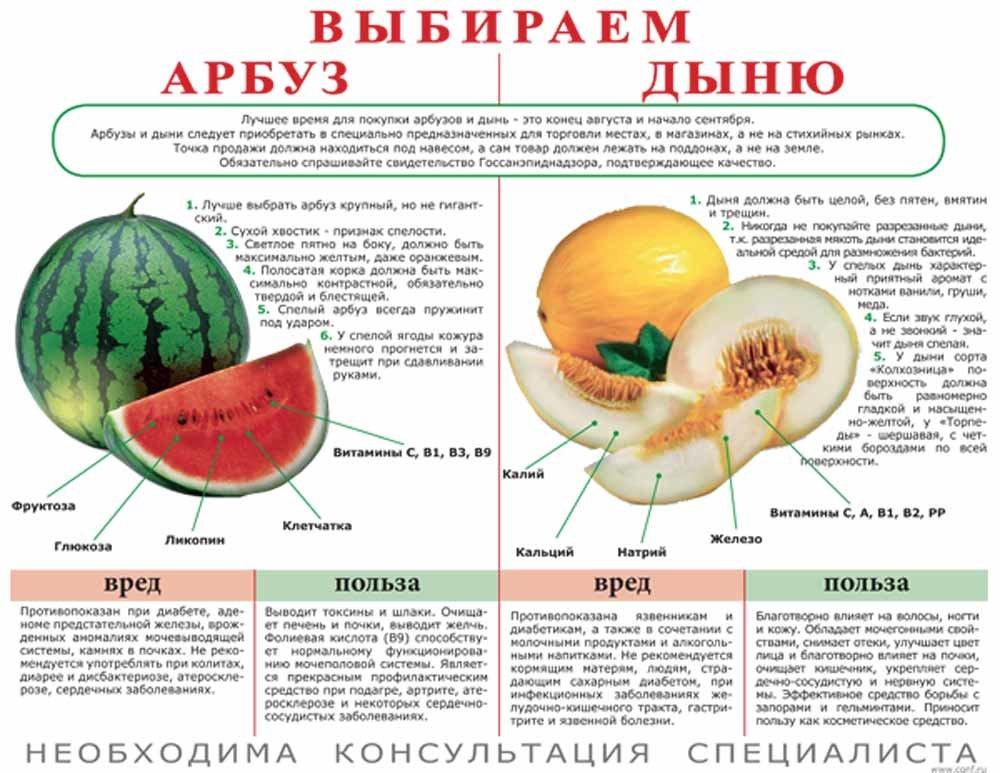 Полезные свойства и вред косточек от арбуза, можно ли их есть
