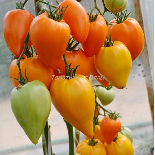 Томат оранжевое сердце (лискин нос): характеристика и описание сорта, урожайность с фото
