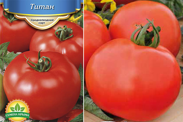 Томат титан: описание и характеристика, отзывы, фото, урожайность, | tomatland.ru