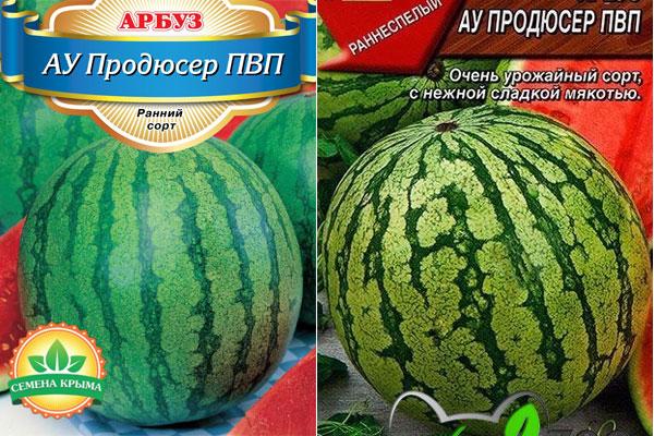 Самые лучшие сорта арбузов для открытого грунта для подмосковья, сибири и средней полосы россии: фото, отзывы