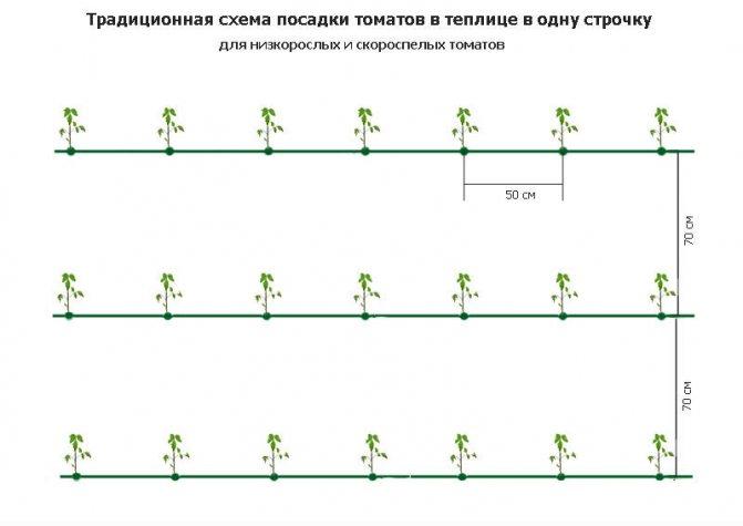 Схема посадки томатов в теплице 3х6; расчёт количества рассады, которую можно посадить на участке 3х6