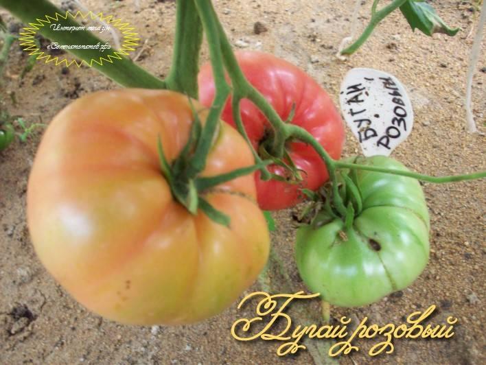 """Томат """"бугай f1"""": характеристика и описание сорта помидор с фото, отзывы об урожайности, бугай красный и розовый"""