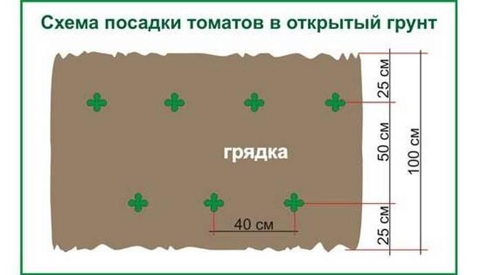 ✅ как и когда высаживать огурцы в открытый грунт, на каком расстоянии - tehnomir32.ru