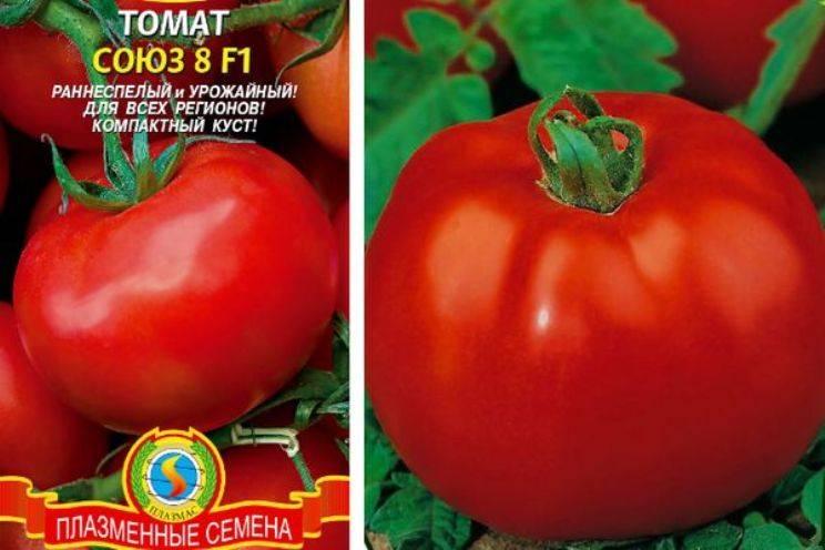 Описание раннеспелого и урожайного томата Союз-8 F1, агротехника выращивания сорта