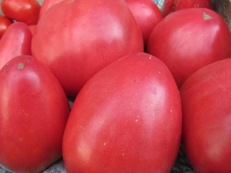 Помидоры-великаны с деликатесным вкусом — описание и характеристики сорта томата «орлиное сердце»