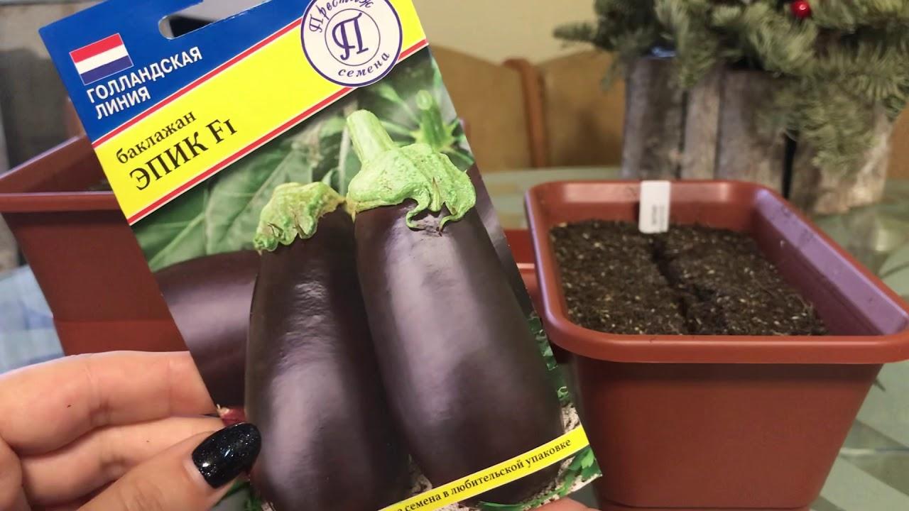 Подготовка семян баклажанов к посеву на рассаду в домашних условиях