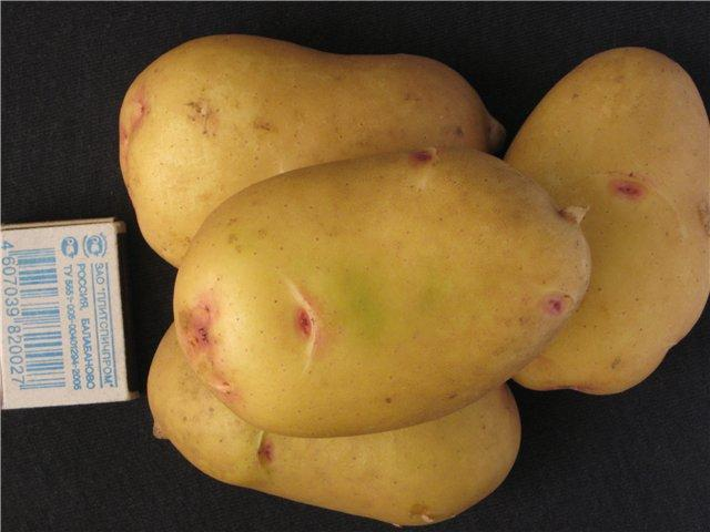 Сорт картофеля «краса» с отличным товарным видом и прекрасным вкусом