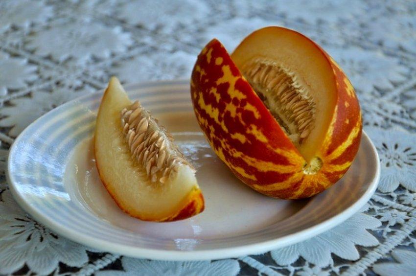 Дыня ананасная: особенности гибрида и рекомендации по выращиванию