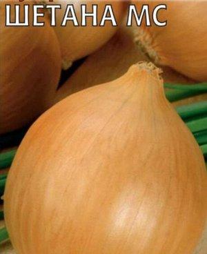 Лук шетана: характеристика и описание среднераннего сорта с фото
