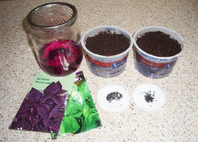 Когда сажать базилик на рассаду: сроки и особенности выращивания – дачные дела