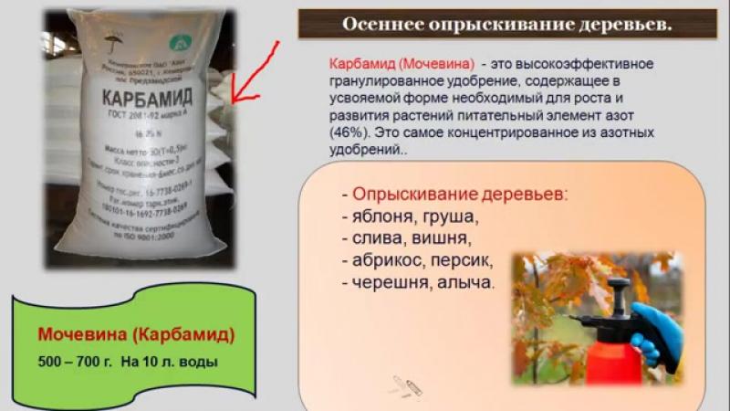 Железный купорос: советы по правильному применению в садоводстве