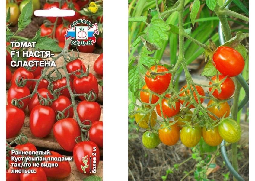 Описание томата Сластена, преимущества и выращивание гибрида