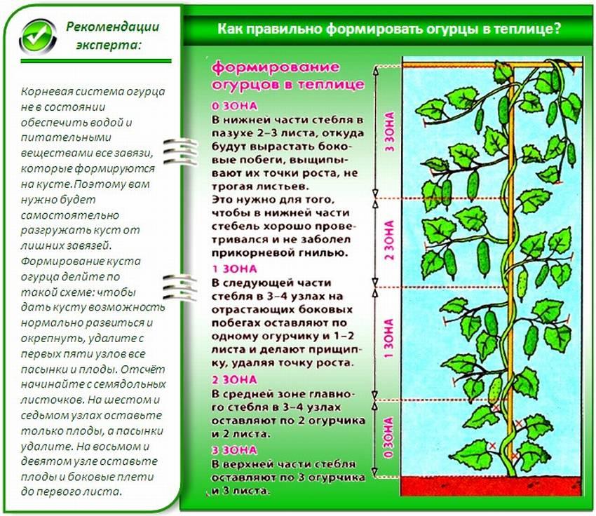 Фунгициды - список препаратов для борьбы с болезнями комнатных растений, садовых цветов, плодовых деревьев и овощей