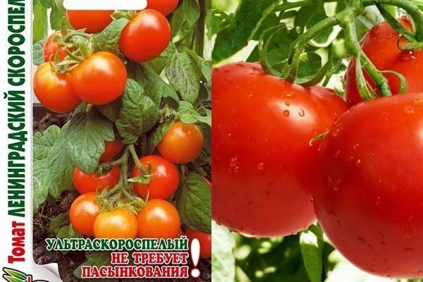 Сорта томатов для ленинградской области для теплиц: обзор и характеристика