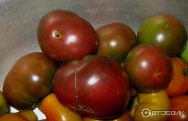 Томат поль робсон: описание сорта, характеристики и урожайность с фото