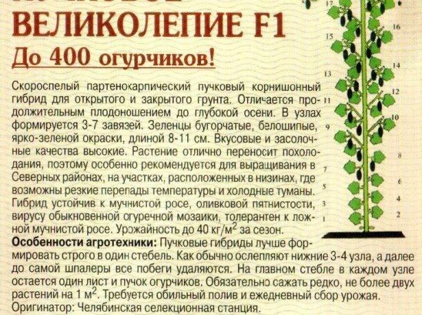 Чудо-дерево: многосортные прививки