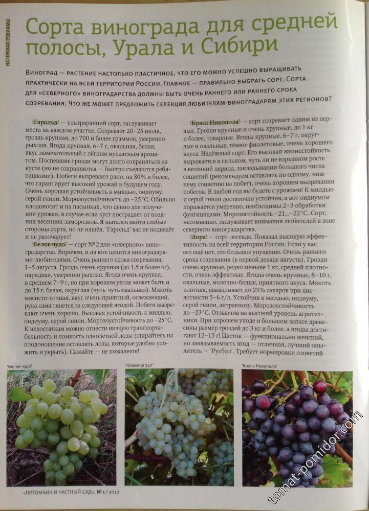 Виноград гарольд: описание сорта, правила выращивания и ухода