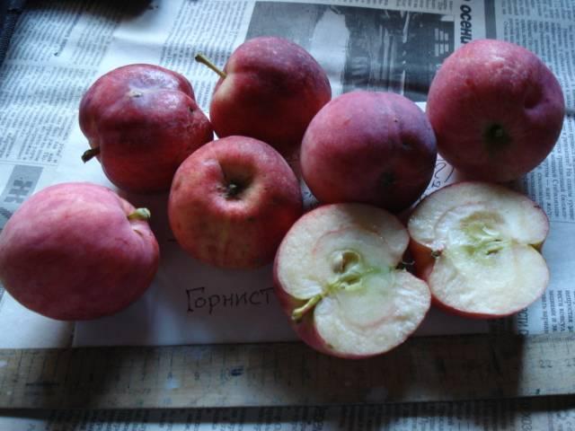 Яблоня горнист: описание, выращивание, отзывы, культивирование