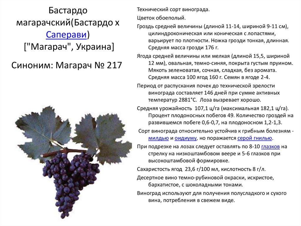 """Особенности сорта столового винограда """"шоколадный"""""""
