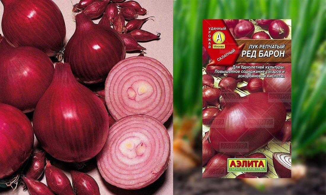 Лук ред барон: описание и характеристики, фото красного репчатого овоща, посадка на севок и выращивание из семян, когда его сажать и чем отличается от сорта кармен?
