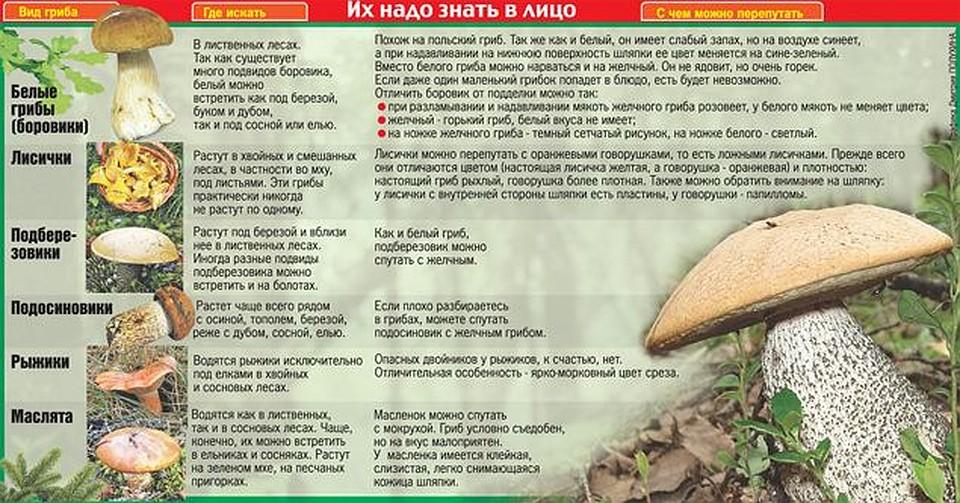 Весенние грибы - грибы