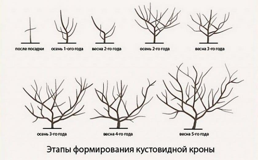Как правильно обрезать колоновидную грушу осенью: сроки, схема, инструкция для начинающих, фото, видео