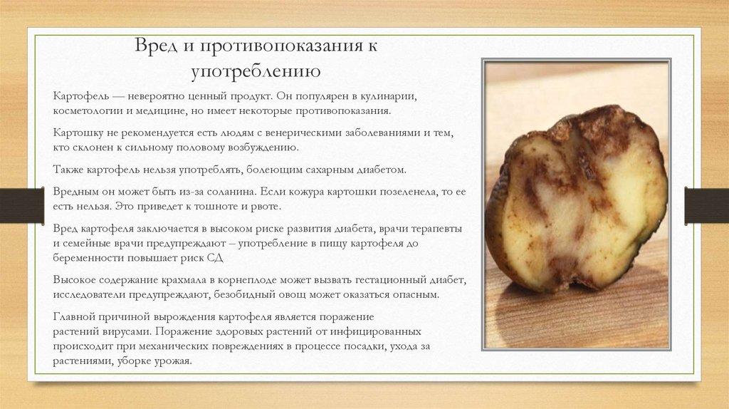 Картофель: польза и вред для здоровья человека, в сыром виде, в печеном, отварной