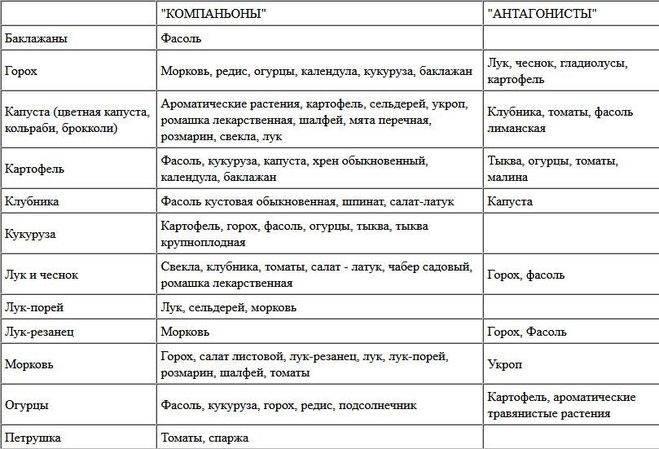 Можно ли в теплице сажать и огурцы и помидоры: особенности, совместимость, посадка и уход, совместное выращивание русский фермер