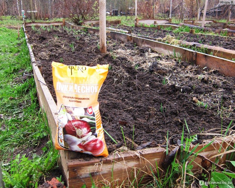 ✅ подкормка озимого чеснока весной: лучшие средства для удобрения, чем подкормить чеснок и как удобрять