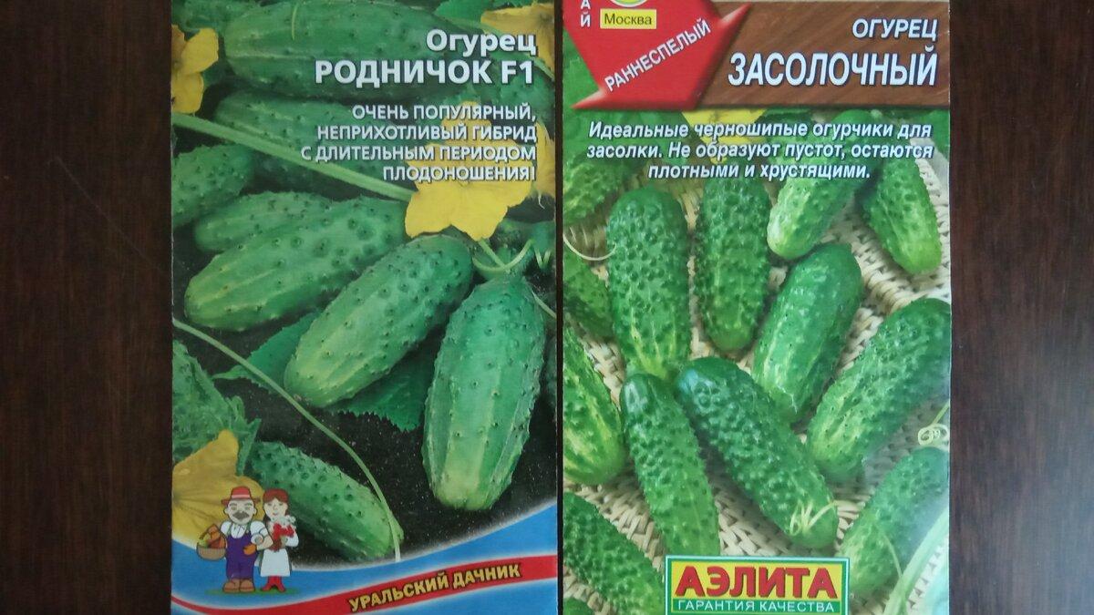 9 сортов огурцов - самые урожайные и высокоурожайные для открытого грунта