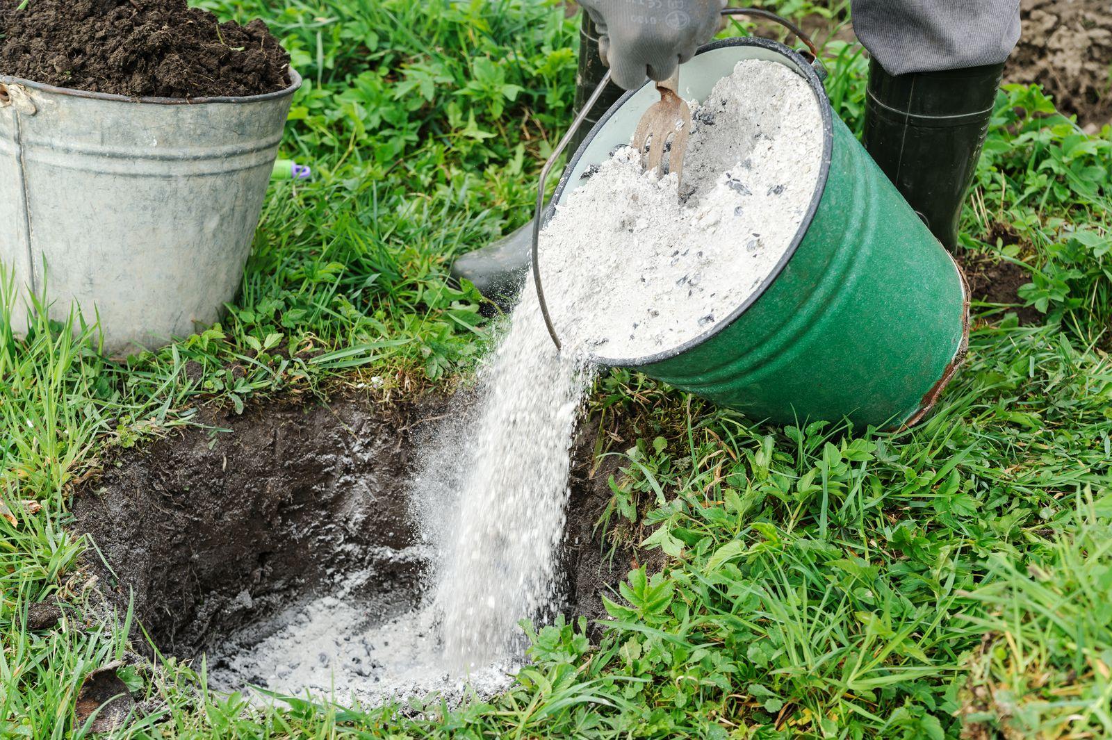 Костная мука как полезное натуральное удобрение: свойства, особенности применения, польза