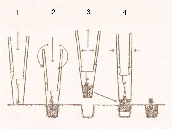 Сеялка для чеснока своими руками: освещаем в общих чертах