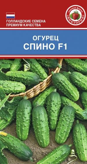 Огурец спино f1: описание и характеристика сорта, фотографии и отзывы, урожайность