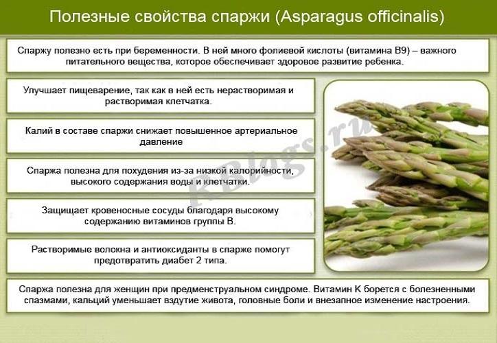 Аспарагус. посадка, размножение, уход, сорта, фото на supersadovnik.ru