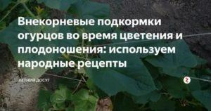 Подкормка огурцов в период плодоношения и цветения, видео и фото