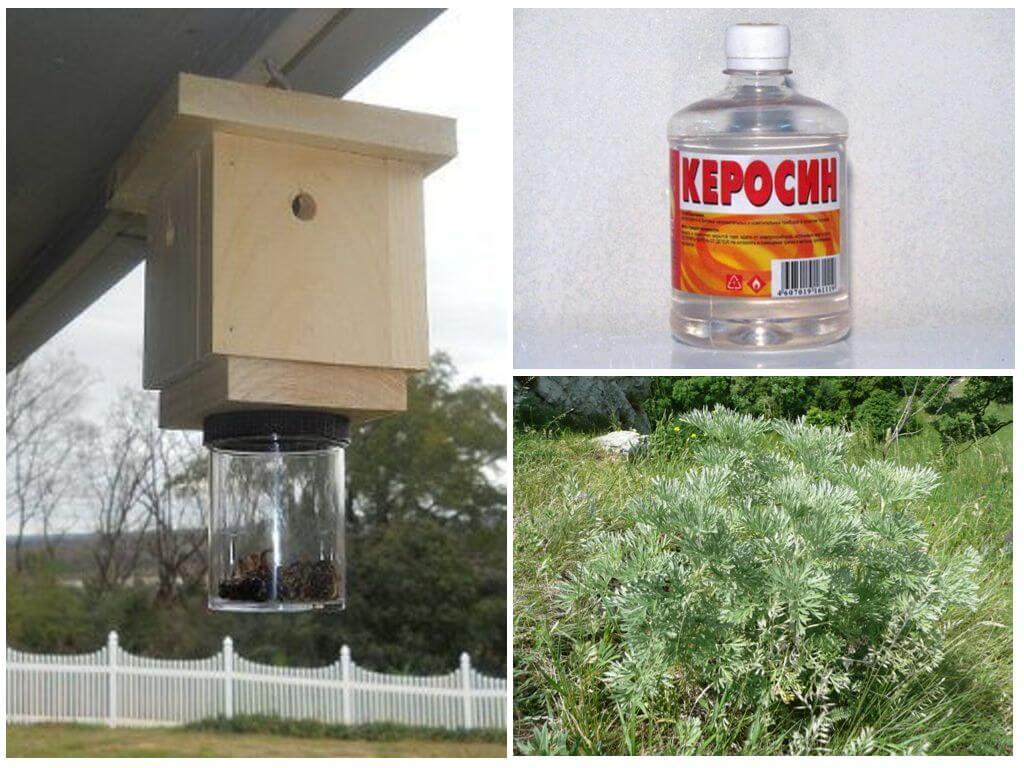 Как избавиться от пчел и ос на даче, в доме, на участке - agroflora.ru