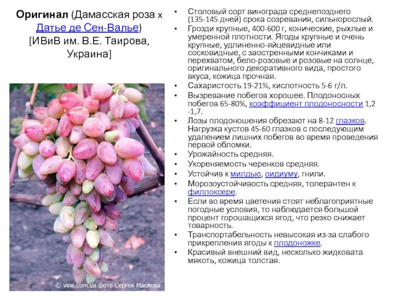 Виноград красотка - описание сорта, фото, отзывы