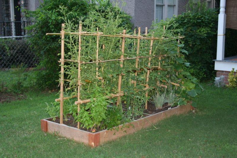 Как я выращиваю томаты на шпалере. преимущества и недостатки метода. фото — ботаничка.ru