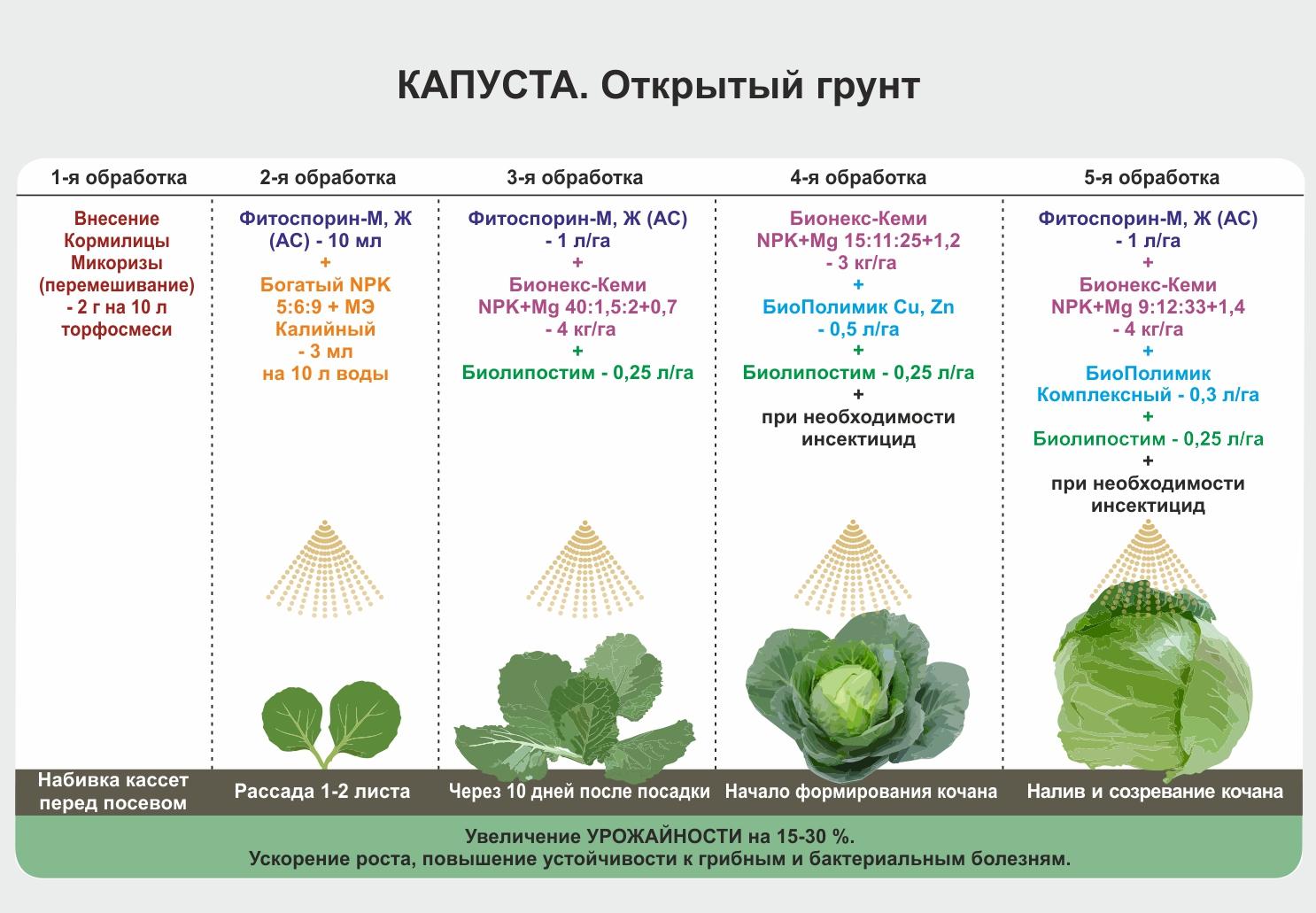Чем подкормить цветную капусту после высадки в открытый грунт, для роста, завязывания головок (формирования кочанов), как удобрять молибденом и правила ухода