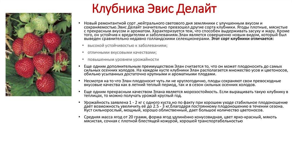 Размножение клубники усами: описание этого и других способов, популярные сорта ягоды, внесение удобрений