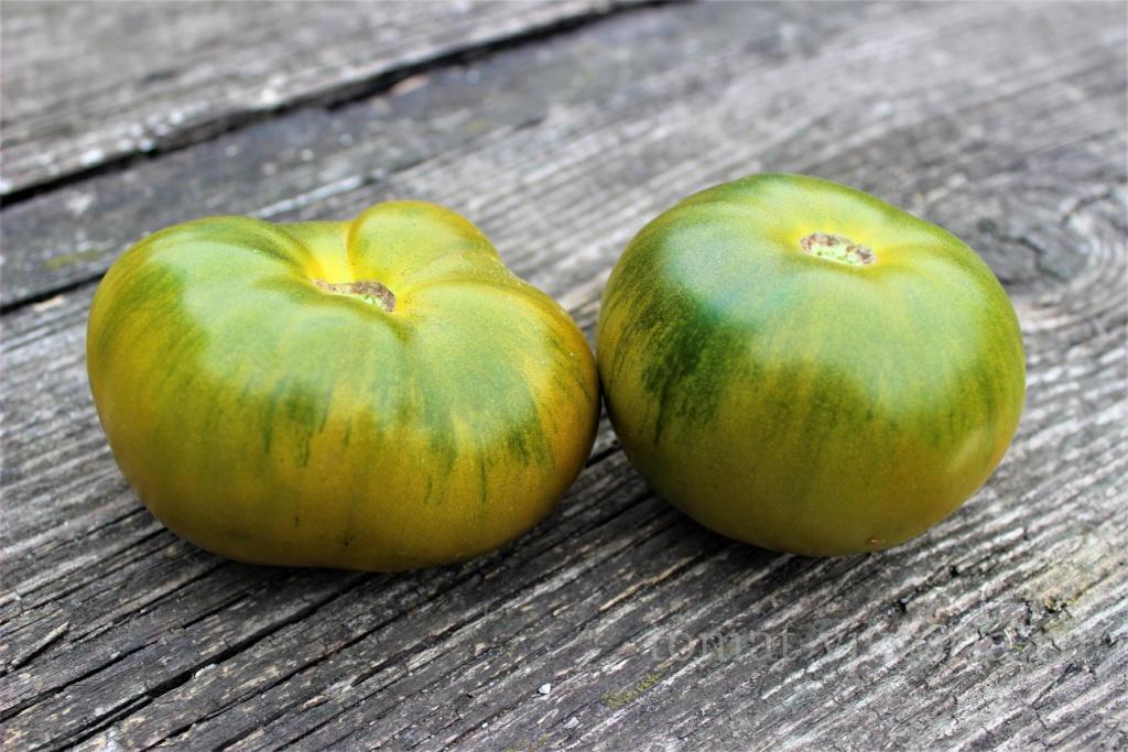 Молодой сорт, успевший полюбиться огородникам — томат «сибирское яблоко»